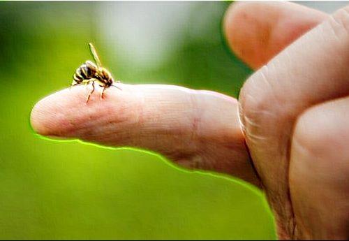 Il blocco globale per Covid-19 sta salvando le api e l'ambiente: i fiori selvatici ricompaiono nelle città di tutto il mondo, le api tornano a ripopolare la terra e le emissioni segnano un ottimo -5,5%…