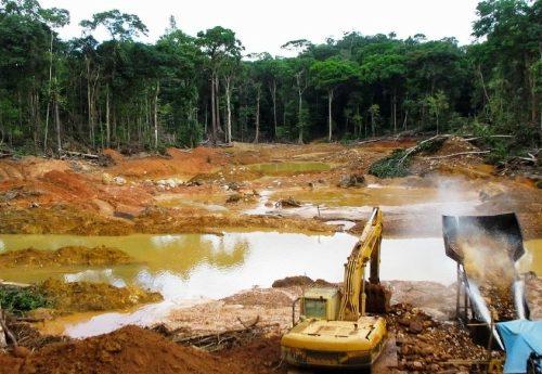 Stiamo distruggendo l'antivirus del pianeta: la metà delle foreste non esiste più per colpa nostra – il vero virus siamo noi!