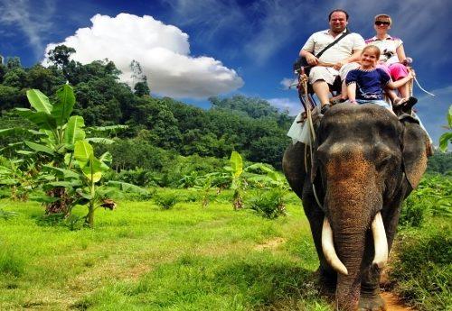 Turismo e animali: dal giro in elefante alla nuotata coi delfini, tutta la sofferenza nascosta dietro le foto delle vacanze a testimonianza dell'idiozia del genere umano