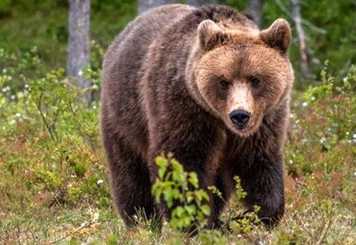 Papillon non è un ribelle, è solo un orso che lotta per la sua libertà. E noi non abbiamo il diritto di togliergliela!
